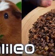 Essen die echt Meerschweinchen? Surprise Box aus Peru | Galileo | ProSieben Live Stream